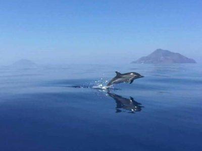 Tour Con Observación De Delfines Olbia Y Golfo Aranci
