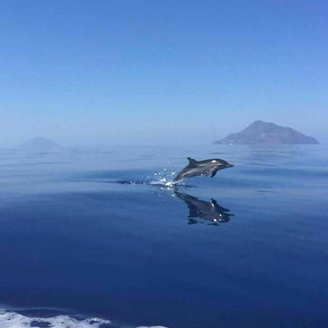 Tour Con Osservazione Delfini Olbia E Golfo Aranci