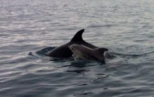 tour in gommone con osservazione delfini Tavolara