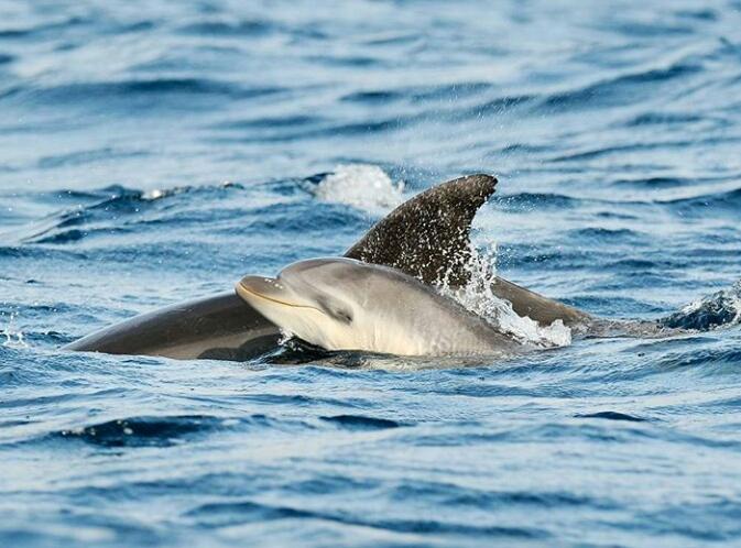 Tour Con Avistamiento De Delfines Olbia Y Tavolara