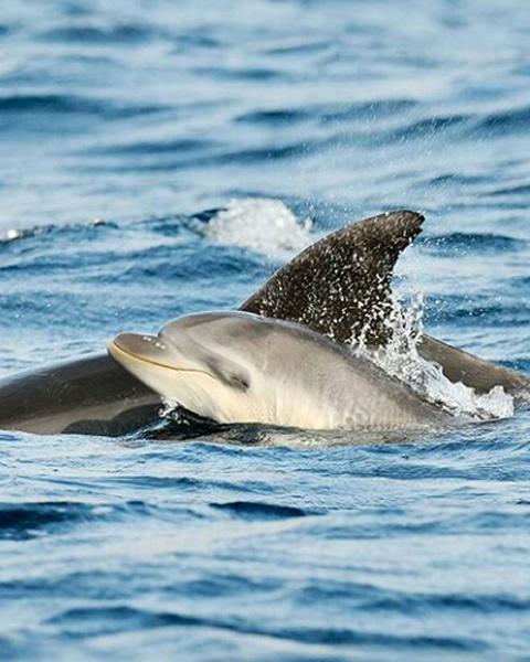 Réservez Notre Visite Exclusive Avec Observation Des Dauphins à Olbia Et Tavolara