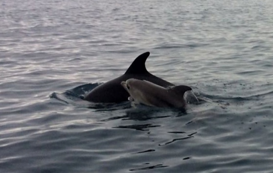 Tour Con Osservazione Delfini Tavolara