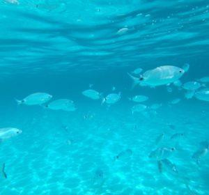 Snorkeling Tour Tavolara – Molara_4