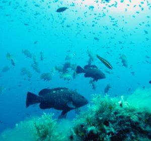 Snorkeling Tour Tavolara – Molara_5