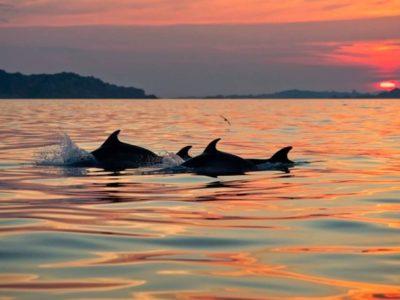 Tour Avvistamento Delfini Olbia- Golfo Aranci