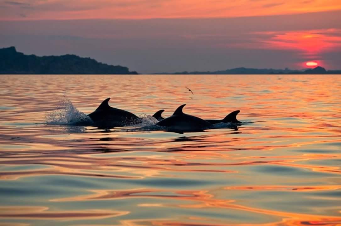 Tour Con Avvistamento Delfini Ad Olbia E Golfo Aranci