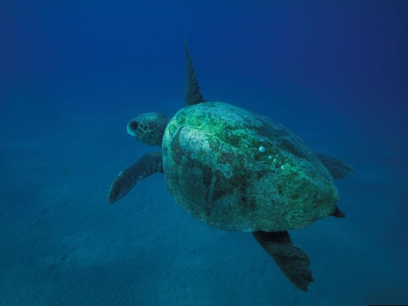Snorkeling A Olbia